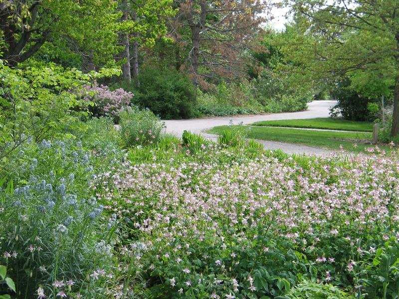 Encore Blog: Do You Want A Native Front Yard? - Dyck Arboretum