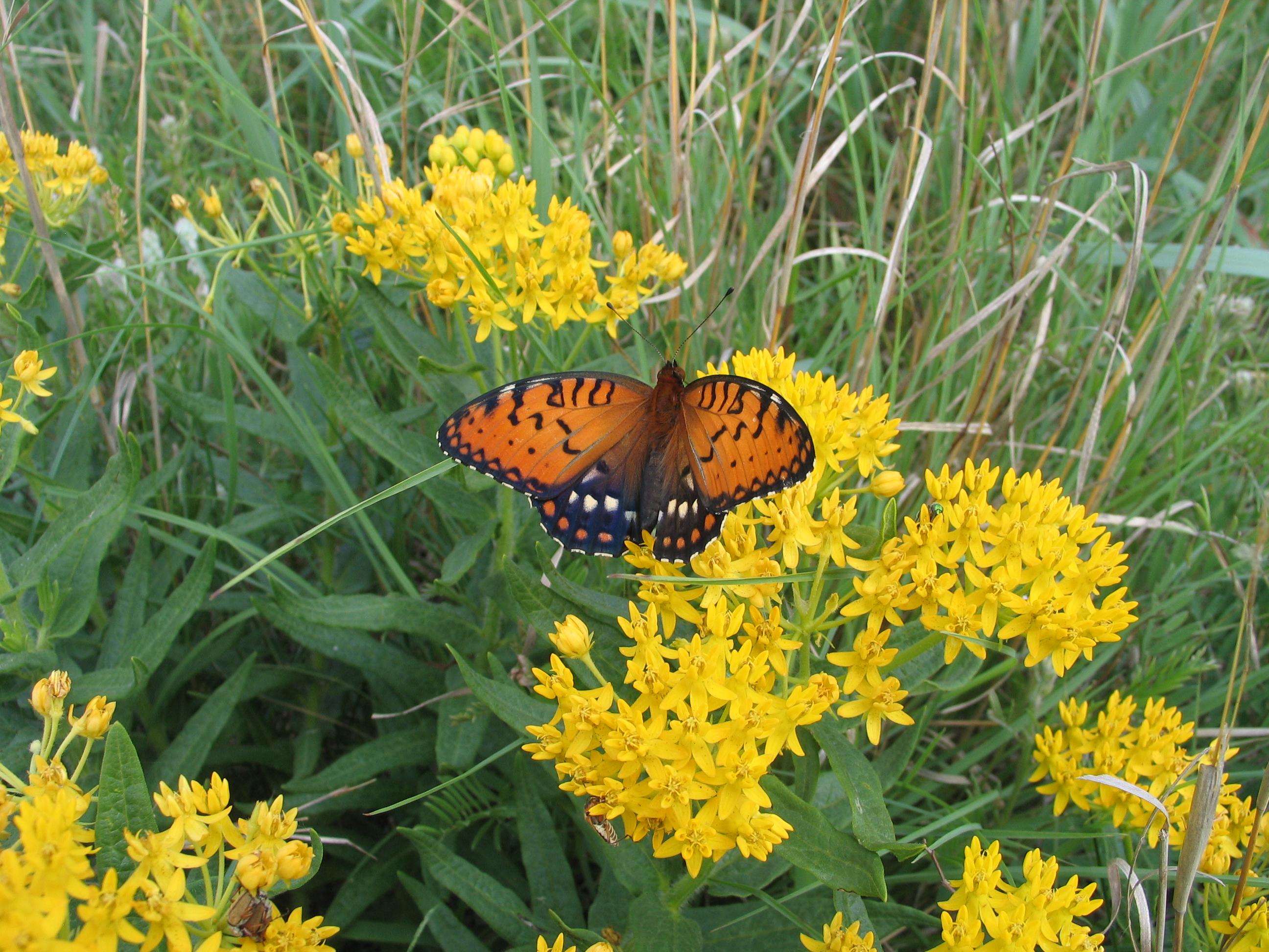 Flying Flowers of Kansas