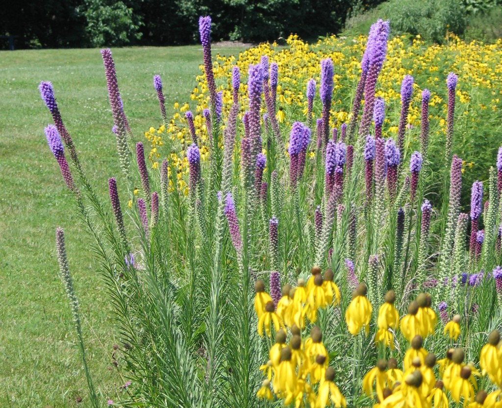 Native Plant Landscaping Symposium