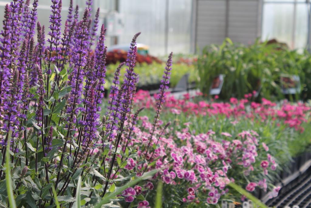 Open Greenhouse