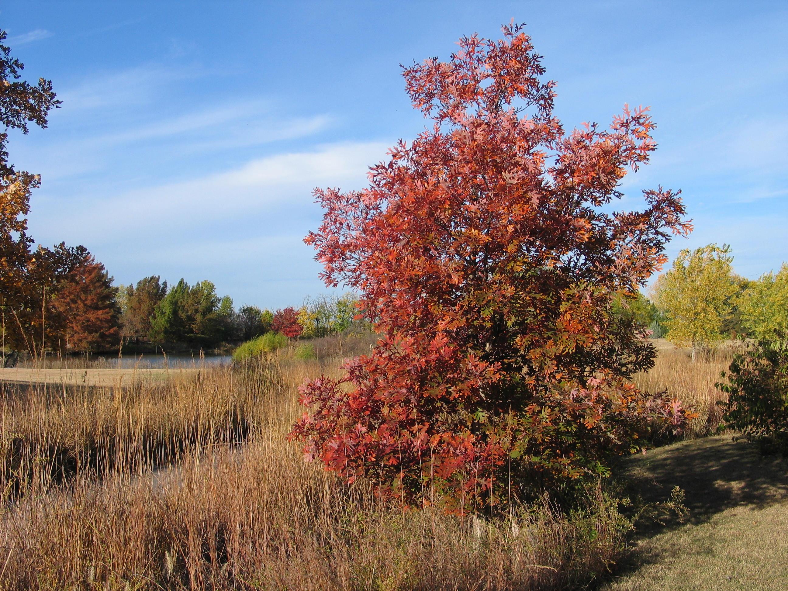 Kansas trees archives dyck arboretum