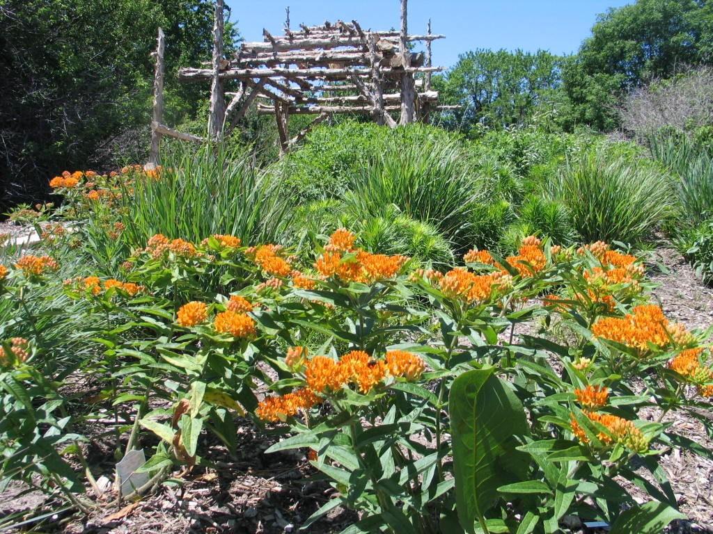 How to design a native plant garden dyck arboretum for Garden plant design
