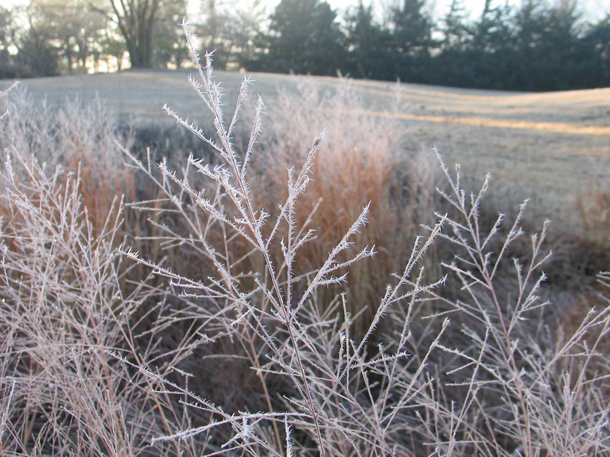 Winter Prairie Hoarfrost