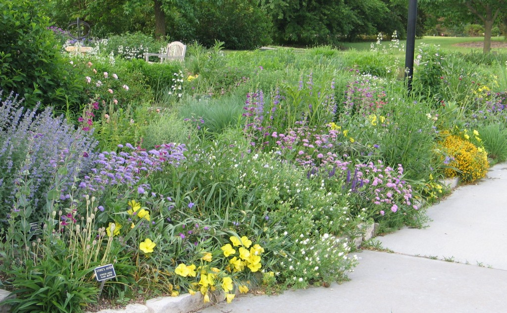 Seven steps to planning your native landscape dyck arboretum for Landscaping with native plants