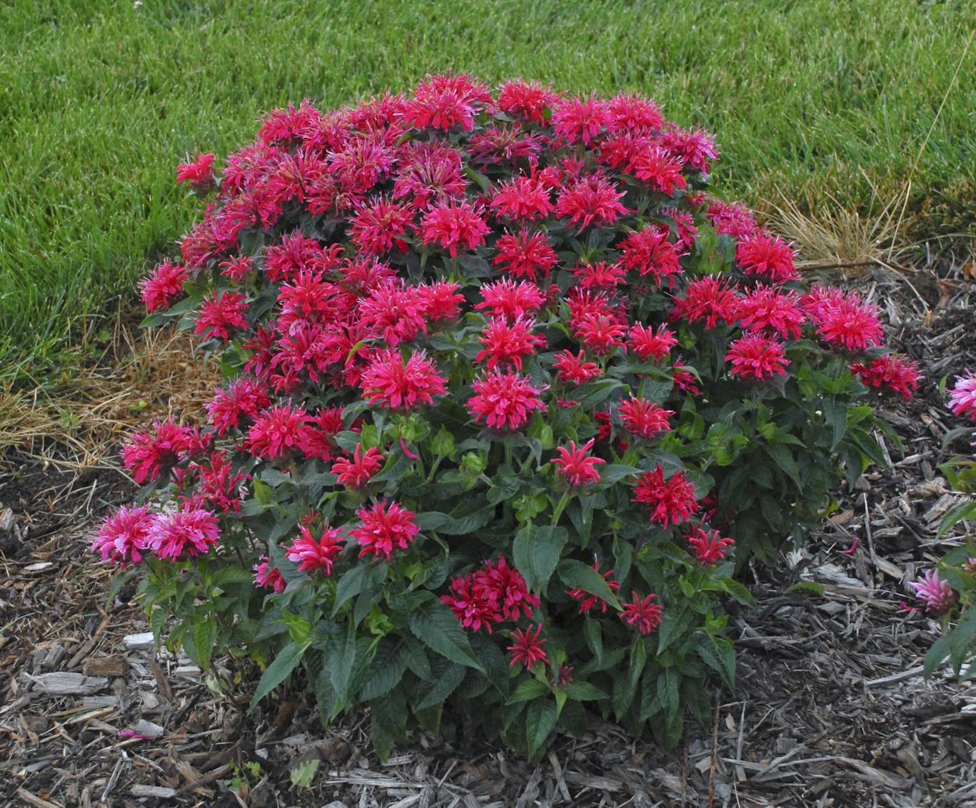 Scott's Top Ten Sun-Loving Plants for Spring 2015 - Dyck ...