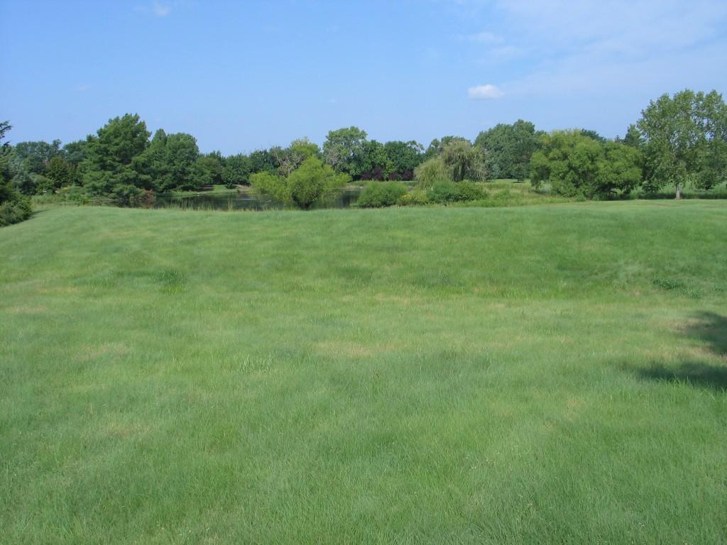 Native Plant School: Buffalo Grass Lawns