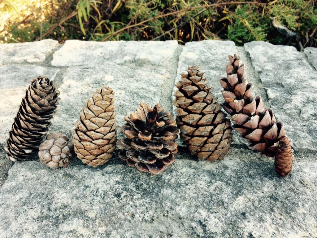Cones of the Arb