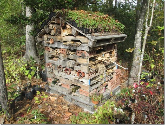 Bee Hotel Photo by John Regier
