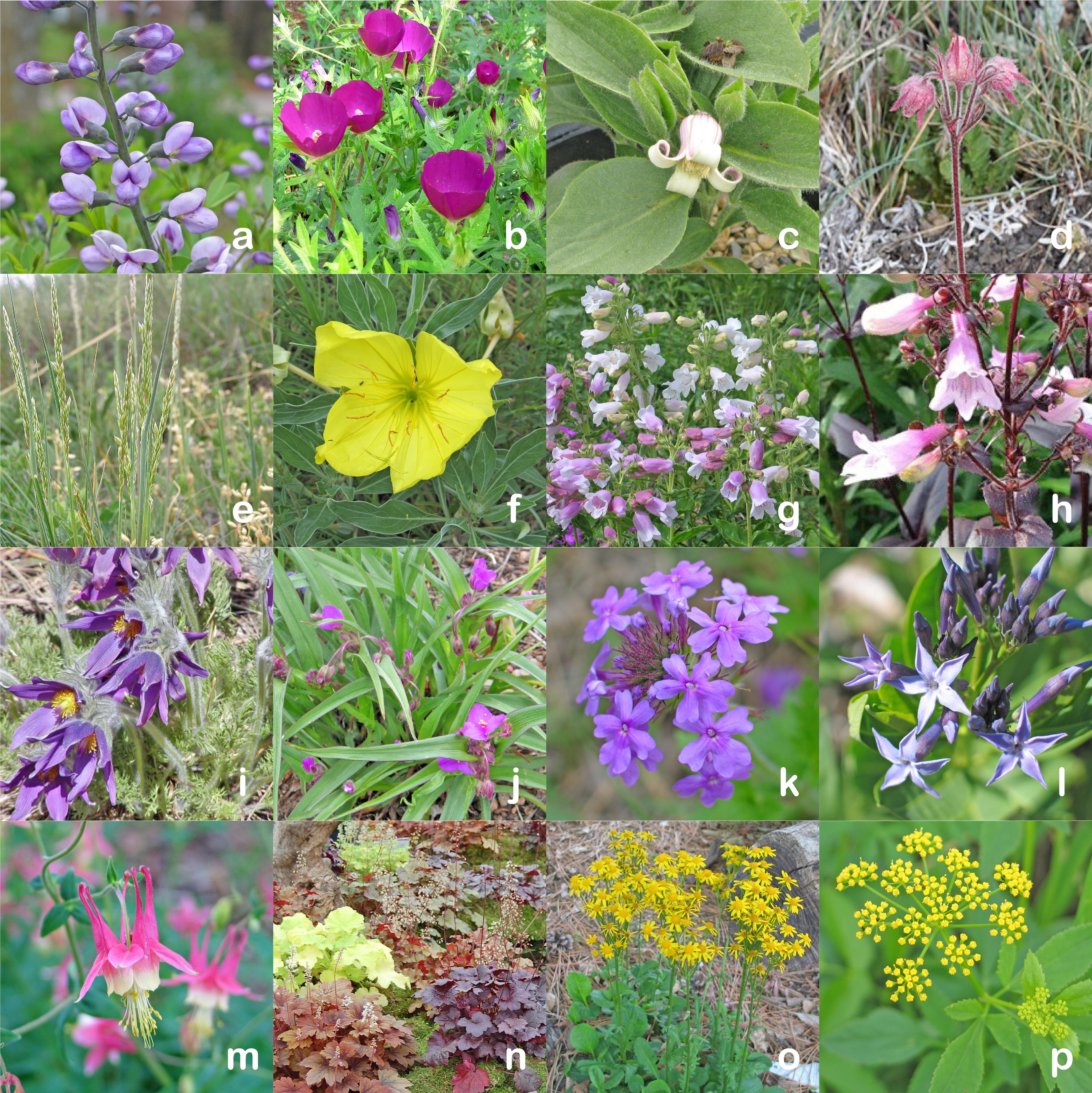 Spring Flowering Native Plants Dyck Arboretum
