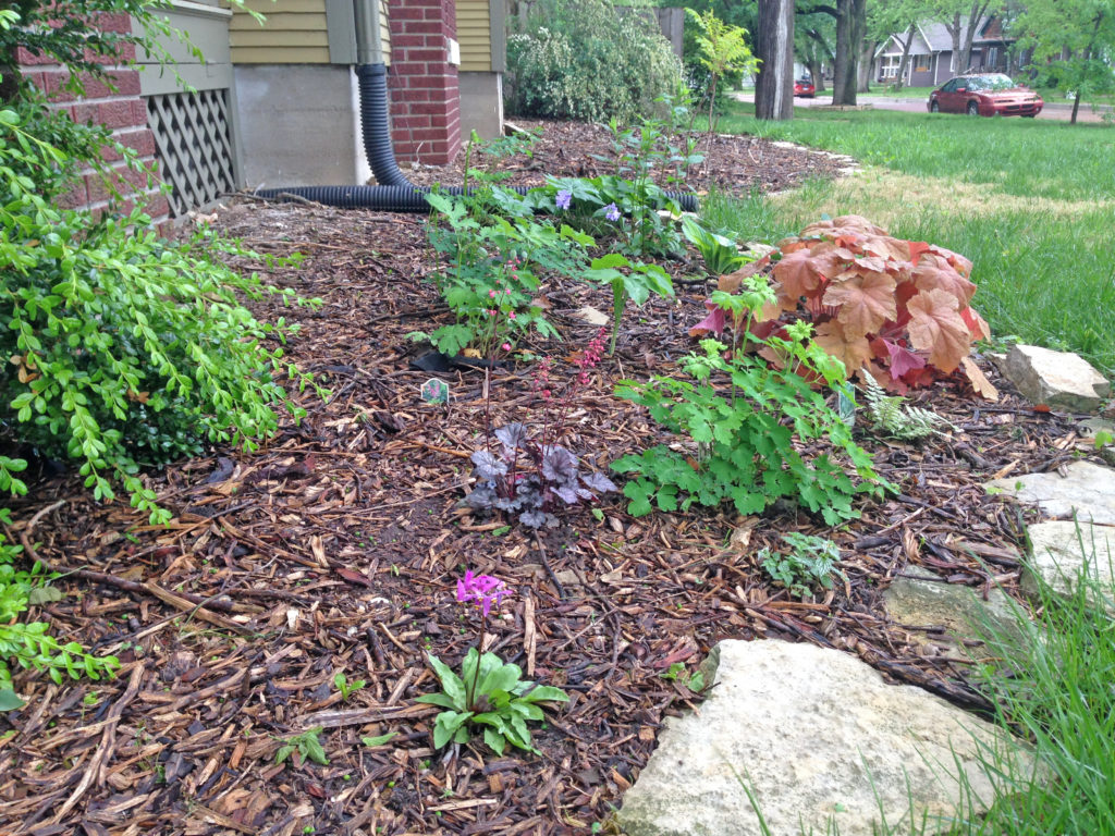 Landscaping with native plants one small step at a time for Landscaping with native plants