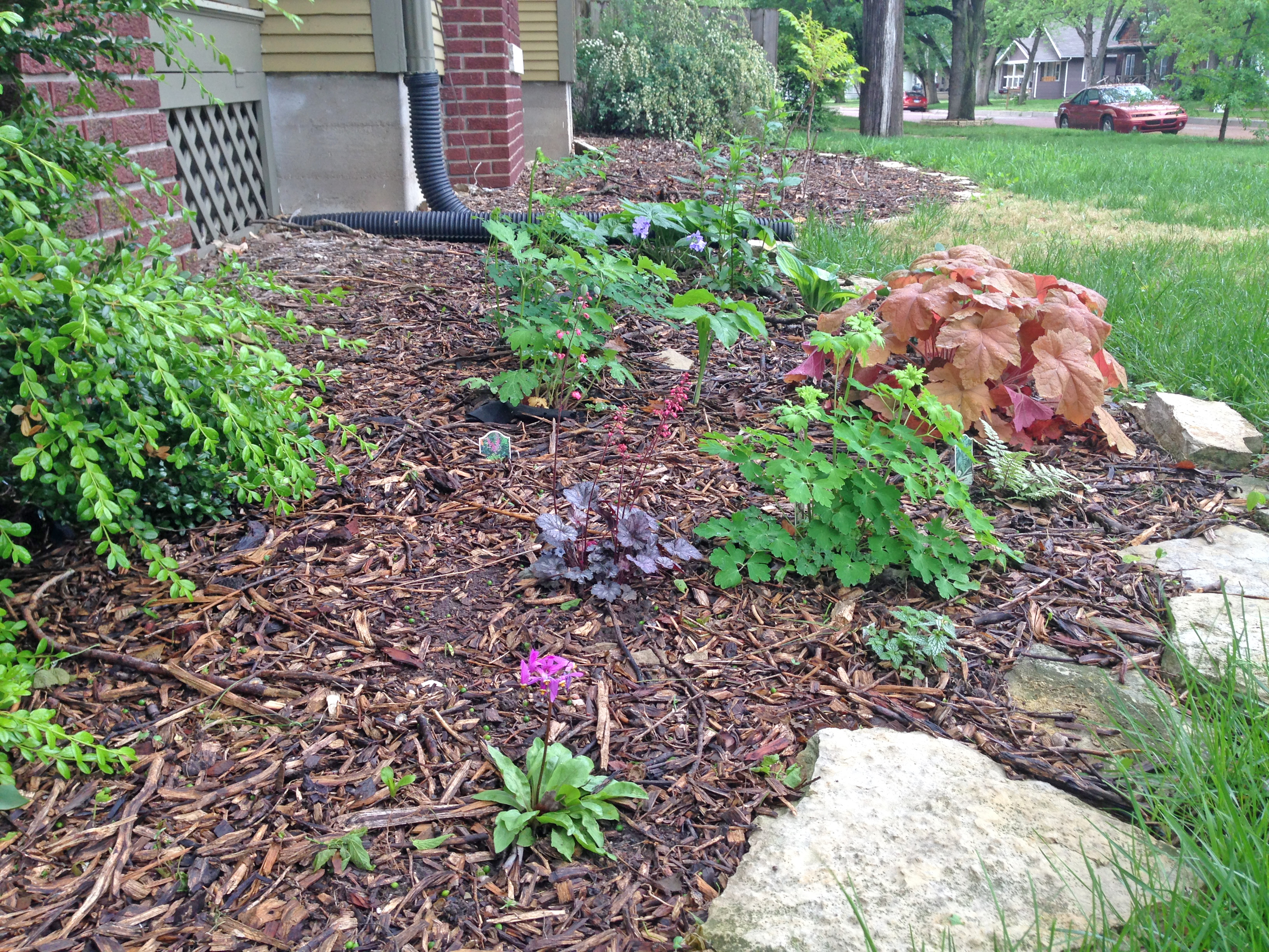 Landscaping With Native Plants : Landscaping with native plants one small step at a time dyck