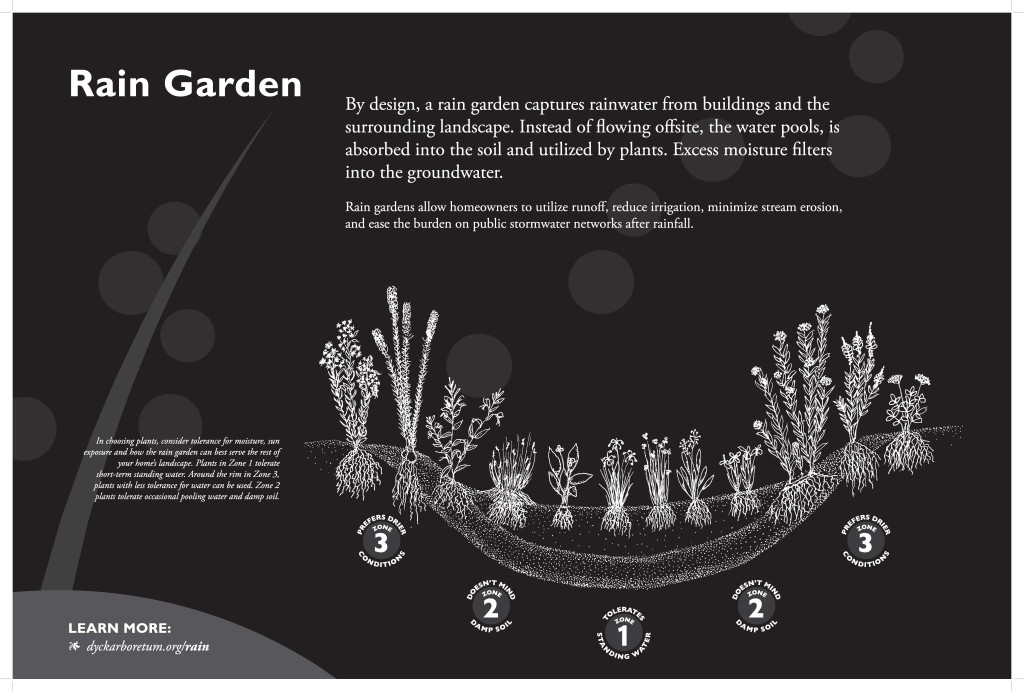 VIRTUAL Native Plant School: Rain Gardens