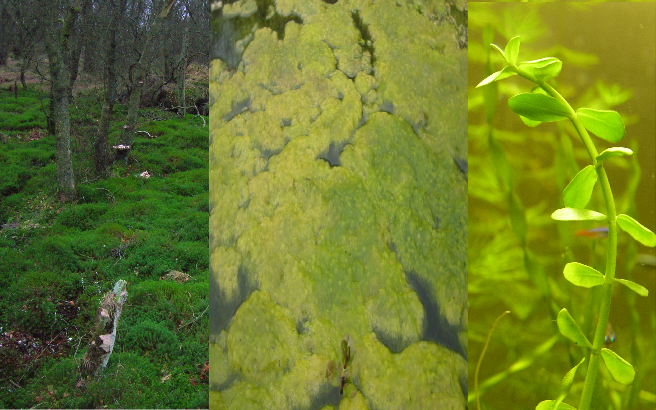 aquatic plants Archives - Dyck Arboretum