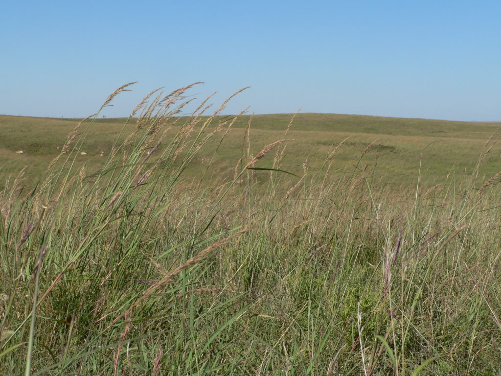 Willa Cather Memorial Prairie near Red Cloud, NE.