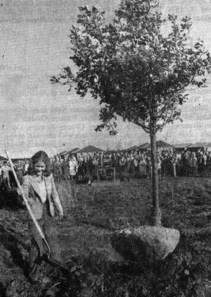 treeplanting10-10-1981-adjusted