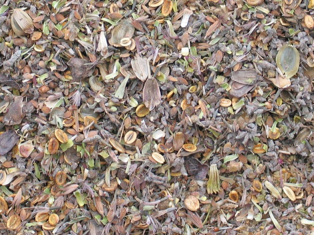 mixing-seed-013_cropped_deshadowed