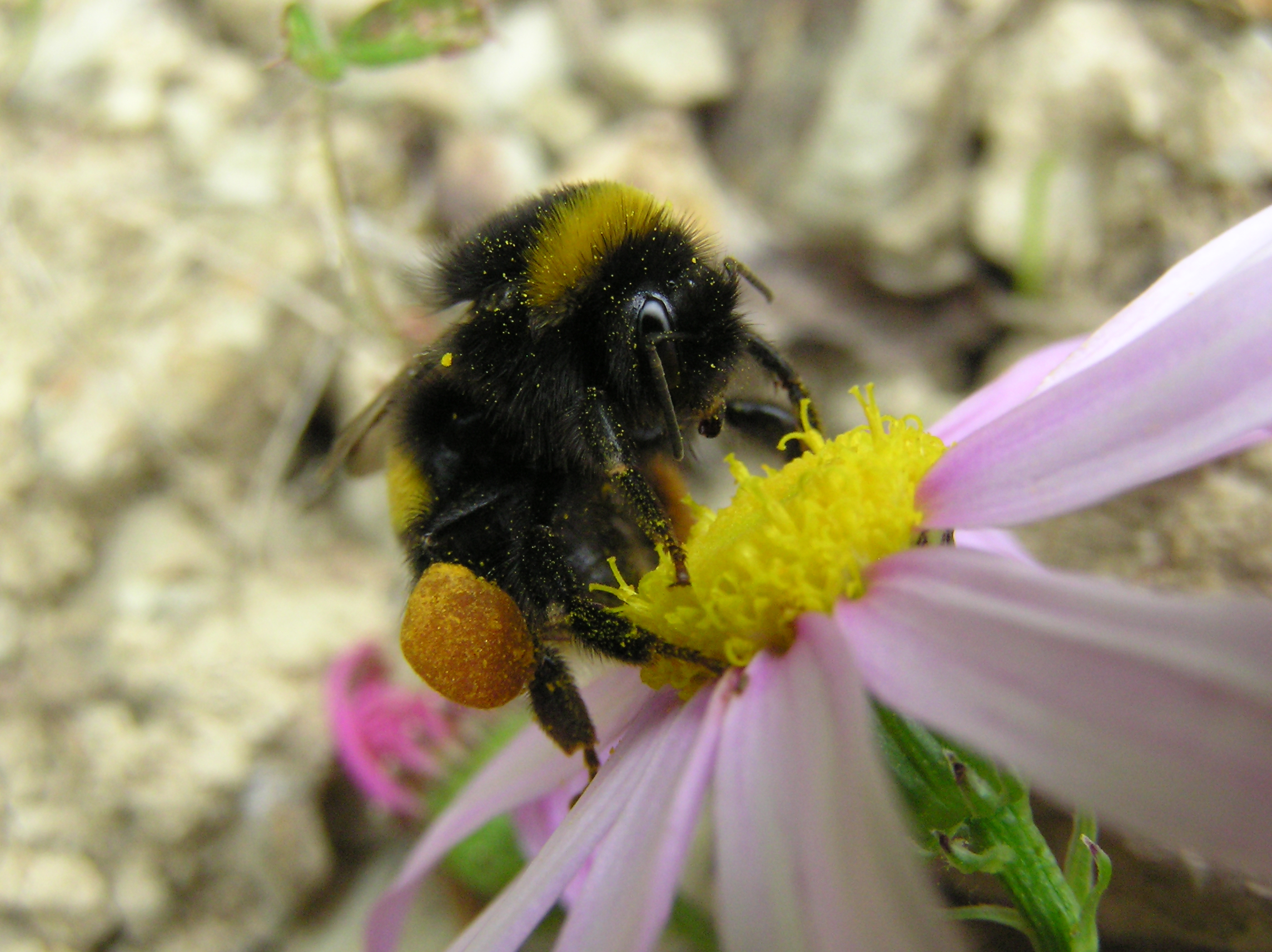 The Bees' Needs: Garden Tips for Creating Habitat - Dyck Arboretum