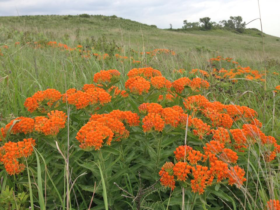 Conservation Stewardship in the Flint Hills (Online Lecture)