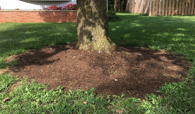 Too much mulch piled up at the base of the tree can lead to fungus, rot, low oxygen levels and tree death.