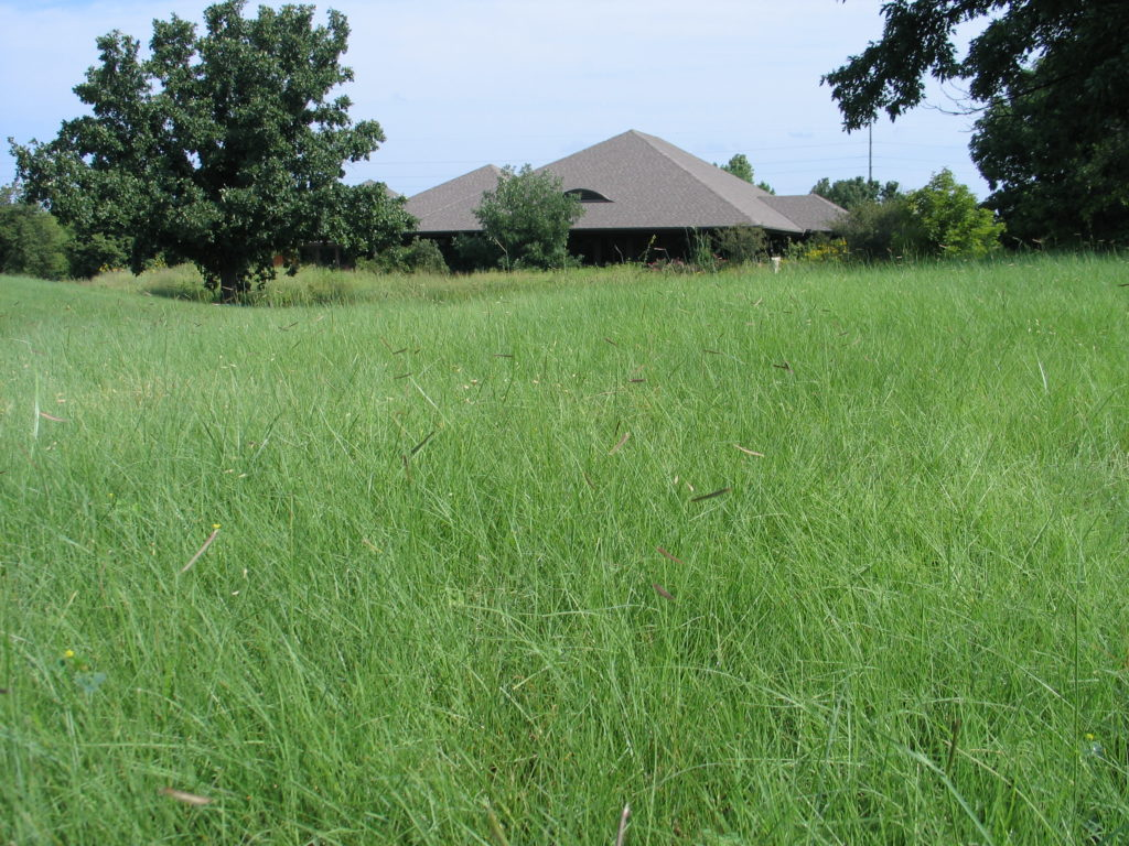 Native Plant School: Sustainable Lawns & Lawn Alternatives