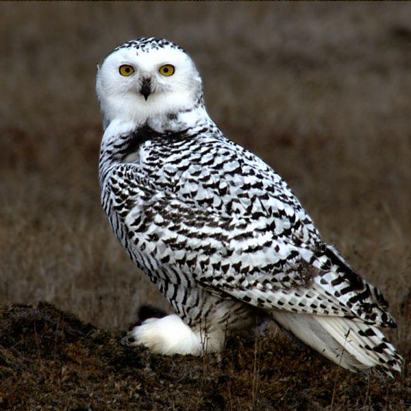 Kansas Bird Populations and Distributions