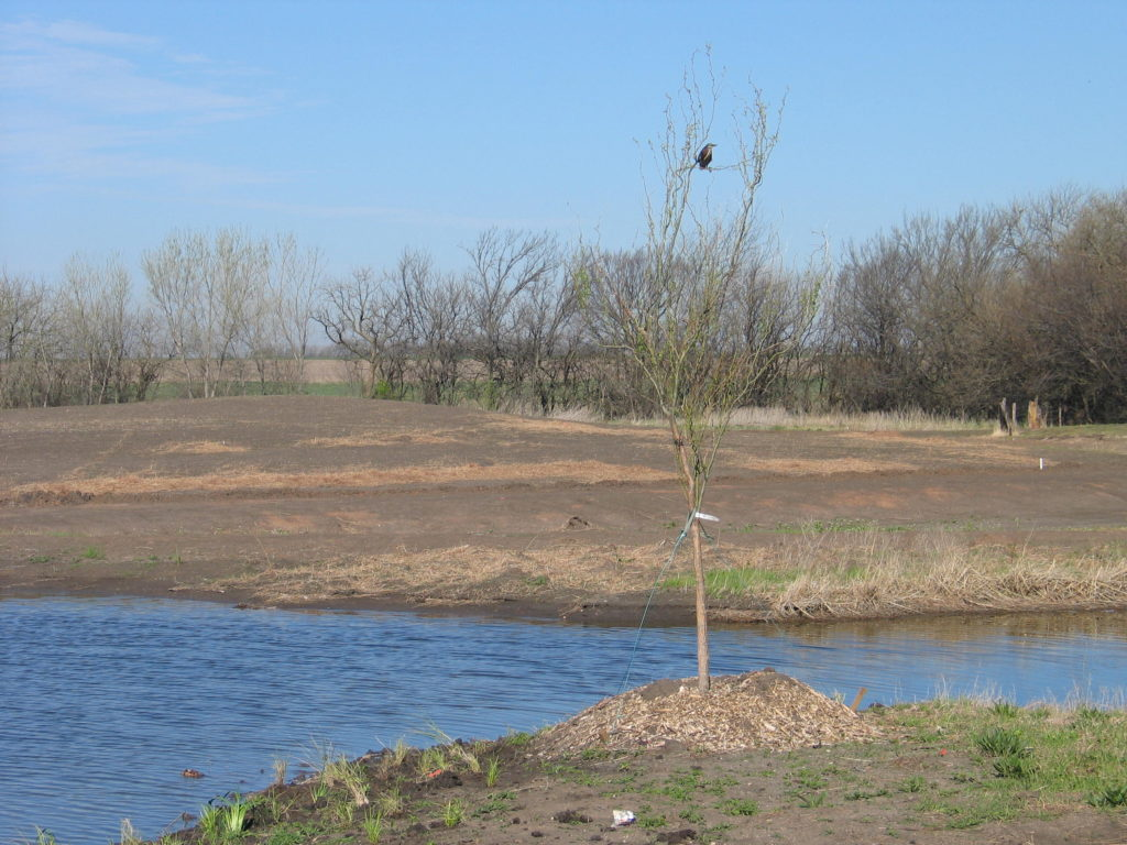 This image has an empty alt attribute; its file name is WaterLinkPlanting-May2009_-026-1024x768.jpg
